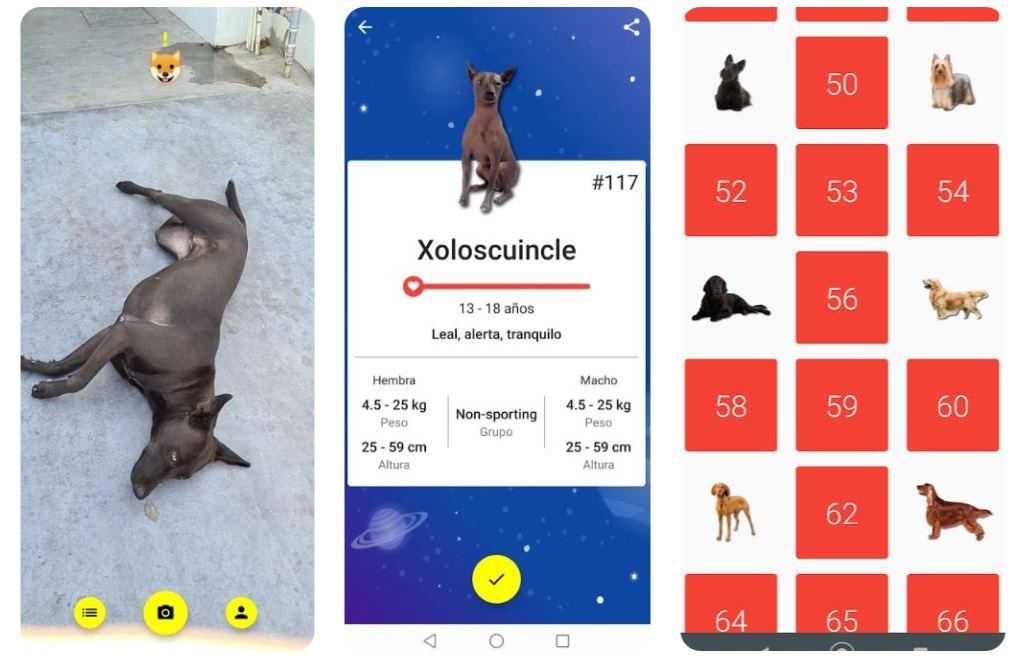 Todogs, una app que busca razas de perros y las colecciona, el estilo de Pokemon Go