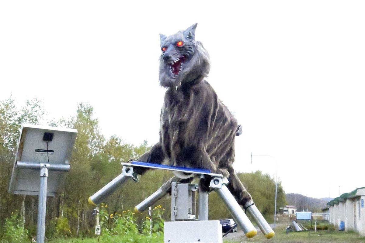 Monster Wolf, los robots lobos que previene de los ataque de osos pero asustan a más de uno